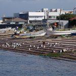 函館漁港付近
