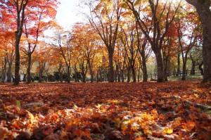 笹流ダムの紅葉