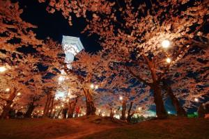 五稜郭公園の夜桜 201604